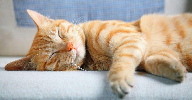 cat daycare shanghai