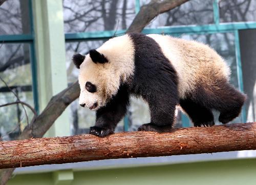 15. Shanghai Zoo